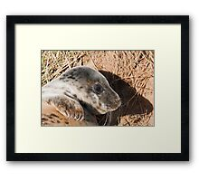 Young Grey Seal (song)  Framed Print