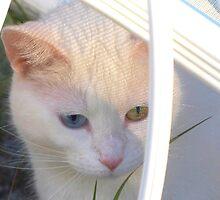 Kitten in Patterned Sunlight by ?? B. Randi Bailey
