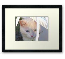 Kitten in Patterned Sunlight Framed Print