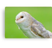 Pointer Owl  Canvas Print