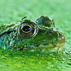 Frog in Duck Weed by (Tallow) Dave  Van de Laar