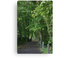wood land path Canvas Print
