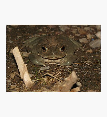 Sonoran Desert Toad (a.k.a Colorado River Toad) Photographic Print