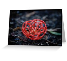 Red Cage Fungus  Greeting Card