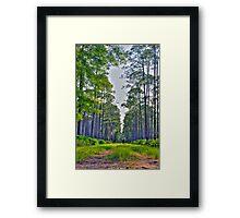 St. Marks Horse Rut - St. Marks, FL Framed Print