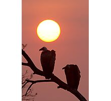 Vulture Sunset Photographic Print