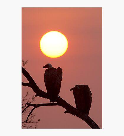Vulture Sunset Photographic Print