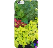 Top view of multicolored and colorful flower bed iPhone Case/Skin