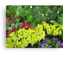 Top view of multicolored and colorful flower bed Canvas Print