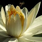 Pond Treasures ~ Part Three by artisandelimage
