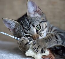 Kitten playing with her toy by NomadicShock
