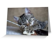 Kitten playing with her toy Greeting Card