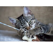 Kitten playing with her toy Photographic Print