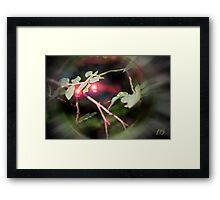 Magical Ruby Elf Berries Framed Print