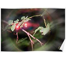 Magical Ruby Elf Berries Poster