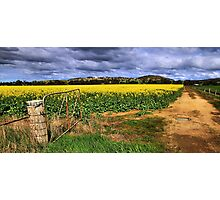 Open Field Photographic Print