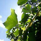 ivy green by crafty-razor