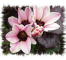 Ixias in pink & white stripe  Photographic Print