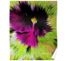 PANSY ANGEL Poster