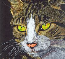Study of Cheeky Charlie (tabby cat) by Angela Cater