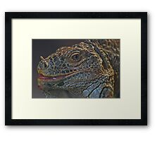 Moniter Lizard   Martel France Framed Print
