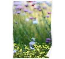 WA Wildflowers Poster