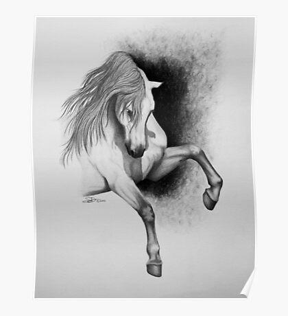 """I Hope You Dance"" - Lusitano stallion Poster"