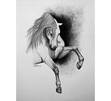 """I Hope You Dance"" - Lusitano stallion Photographic Print"