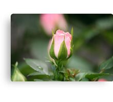 A bud for my bud Canvas Print