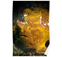 Yellow frog fish - Lembeh Straits  Poster