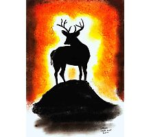 Sunset Stag Photographic Print