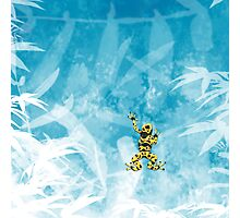 Poison Frog Photographic Print