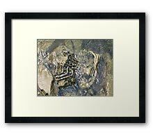 natural history III Framed Print
