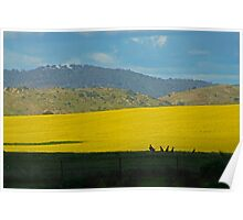 Roos and Canola Poster