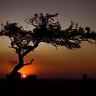 Dog Rocks Tree Sunset by ImagesbyDi