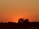Orange Sunset - 2 of 2 by Barberelli