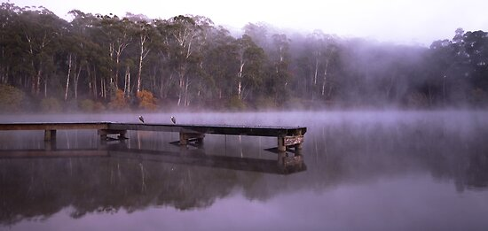 Fog on Lake Daylesford by ImagesbyDi
