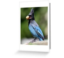 Stellar's Jay With a Beak-full Greeting Card