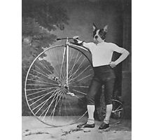 Boston Terrier with Bike Photographic Print