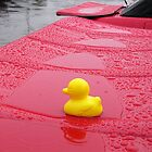 Nice weather for ducks! by Paul Woloschuk