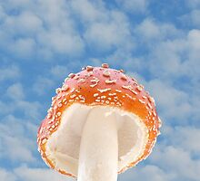 Mushroom Sky-Red Mushroom Against A Summer Sky by Ron Day
