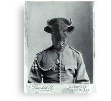 Distinguished Bison Canvas Print