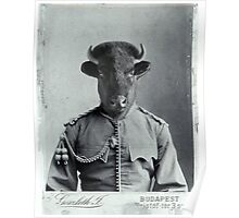 Distinguished Bison Poster