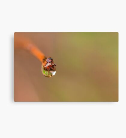 Water droplet on a twig Canvas Print