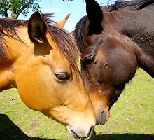 Equine Lovers by Amy Brookins