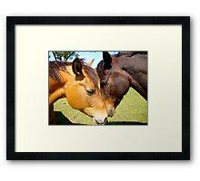Equine Lovers Framed Print