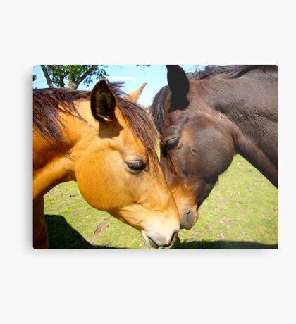 Equine Lovers Metal Print