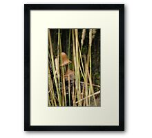 Within the Grass Framed Print