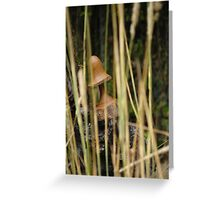 Within the Grass Greeting Card