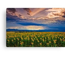 A Late Evening In August Canvas Print